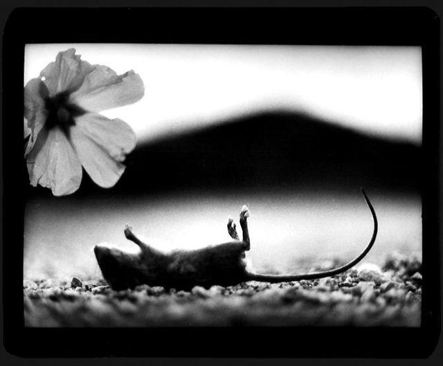 Black-and-white splendor (35 pics)