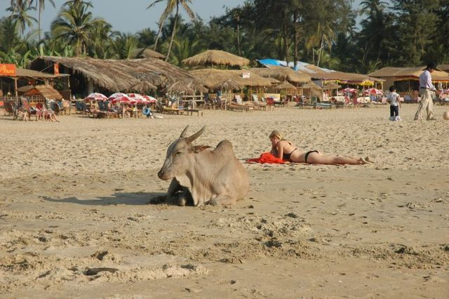 Luxury holidays in Goa (34 photos)