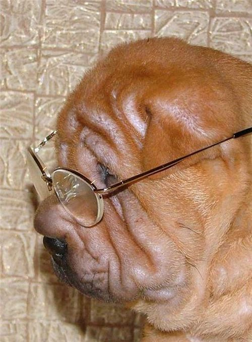 "Positive emotions with ""wrinkles"" ;) (49 pics)"