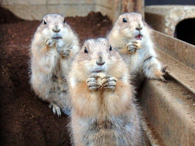 These funny animals (29 pics)