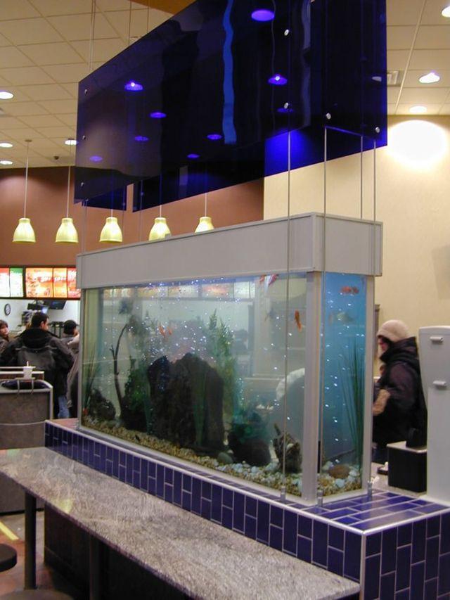 Five stars aquarium for the fish (50 pics)