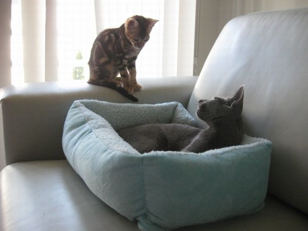 Kitty's tactic to take over a place (10 pics)