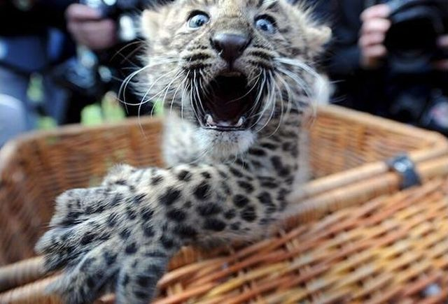 These funny animals (32 pics)