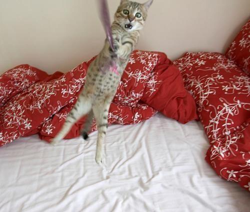 These funny animals (44 pics)