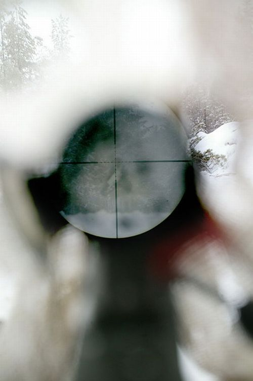 World through the eyes of a sniper (14 photos)