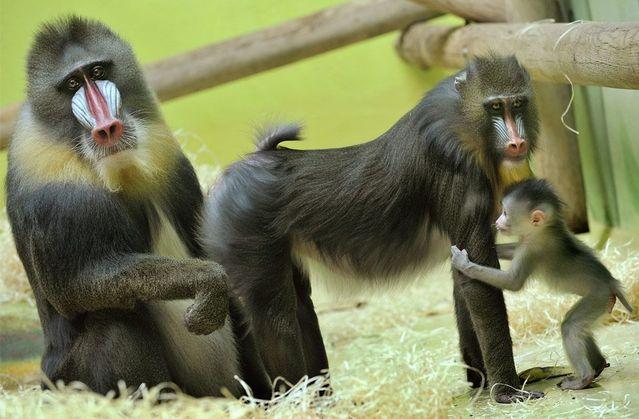 Zoo tour (37 pics)