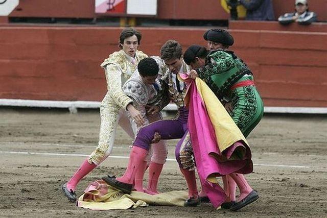 Bull's revenge (6 pics)