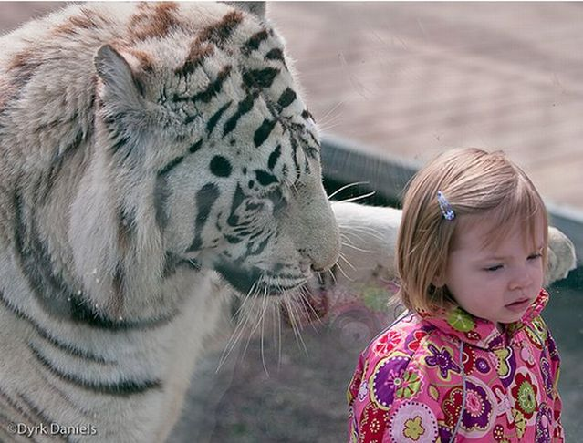 Kids and a tiger (3 pics)