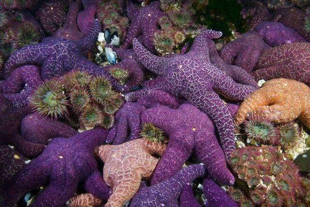 Underwater world (39 photos)