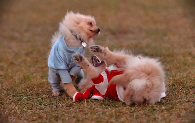Horror of the day. Dog fight (20 pics)