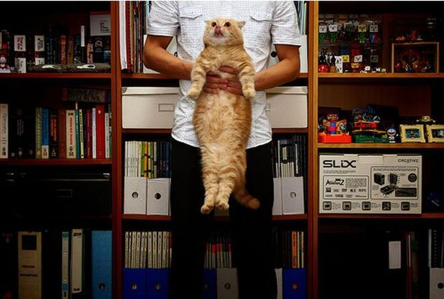 Garfield in real life (43 photos + 2 videos)