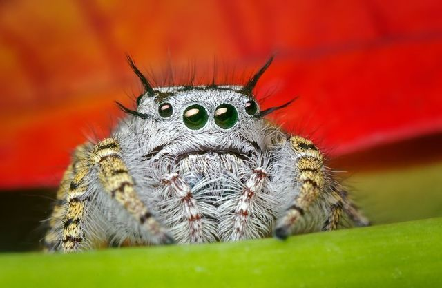 Insects and spiders (65 photos)