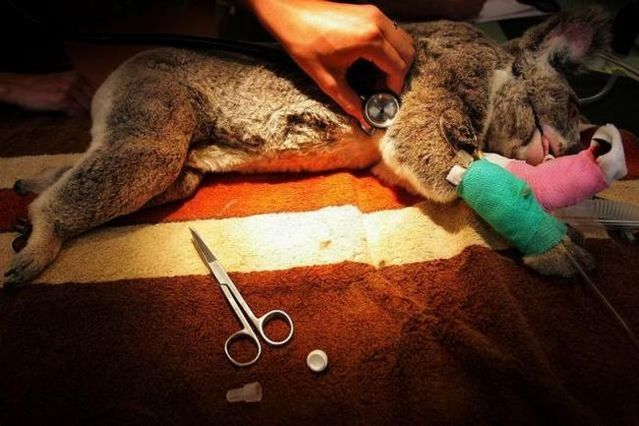 Hospital for Animals (10 pics)