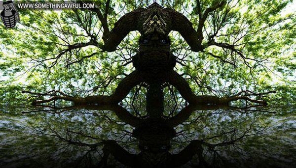 Mirrors! (29 pics)