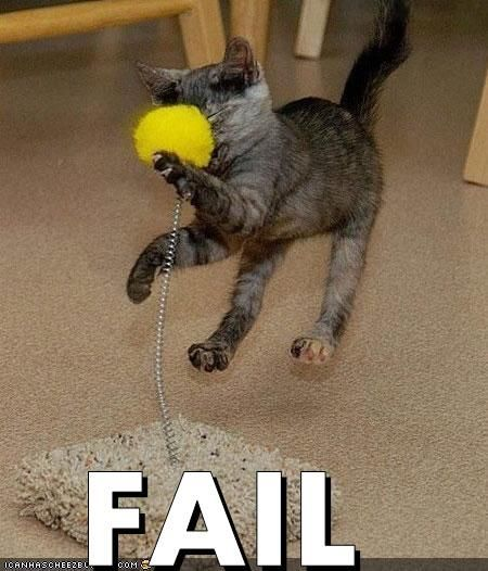 These funny animals (26 pics)