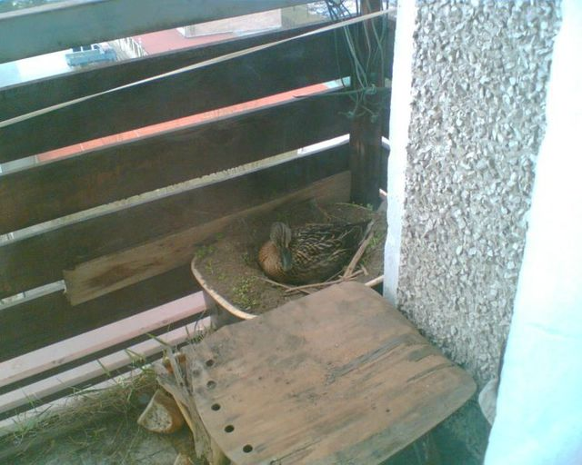 Unexpected surprises on the balcony (5 photos)
