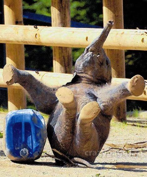 These funny animals (34 pics)