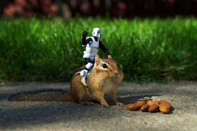 Star Wars spills into the chipmunk universe! (7 pics)