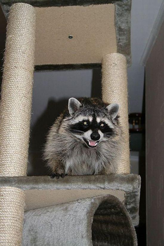 Domestic pet (10 pics)