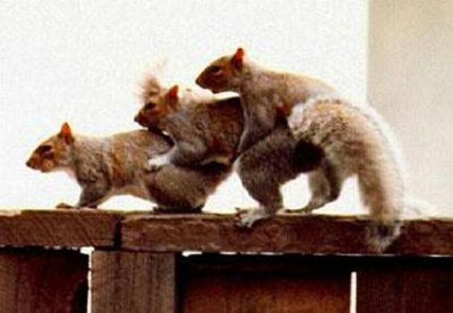 Pervert animals )) (29 pics)