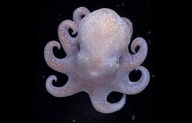 Unbelievable creatures from the underwater depths (31 pics)