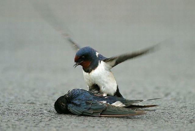 Story of a poor birdie (13 pics)
