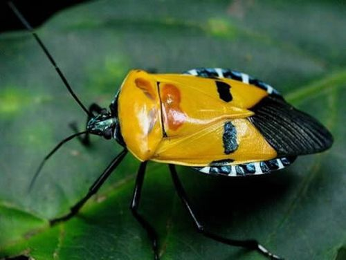 Animals and insects with human faces (10 pics)