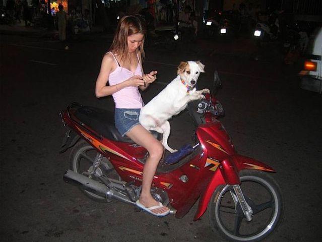 Biker dogs (20 pics)