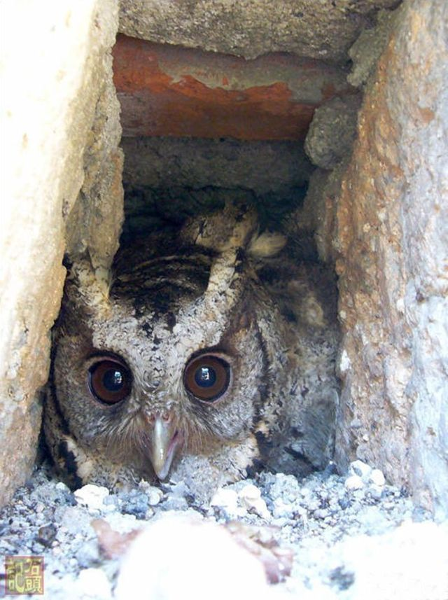 Apartment of an owl in a city (12 pics)