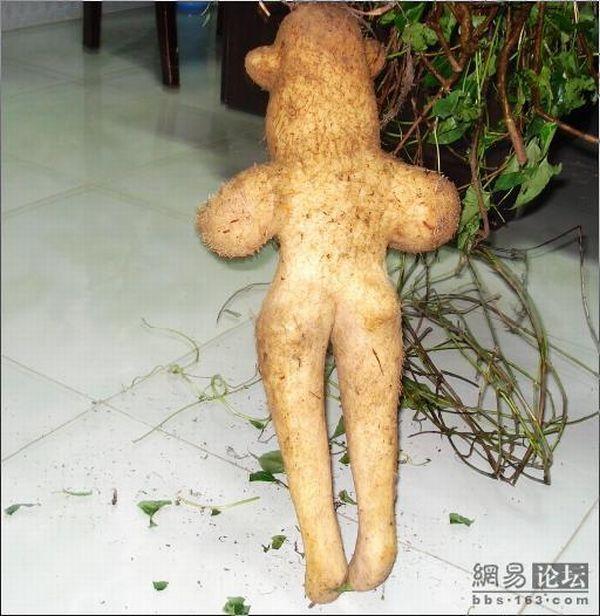 Unusual vegetable! (5 pics)