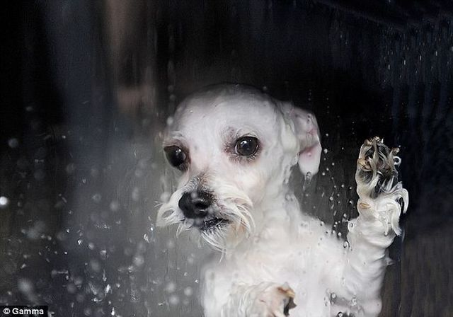 How people wash their pets (7 pics)