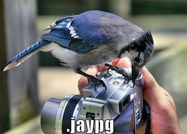 Daily picdump (132 pics)