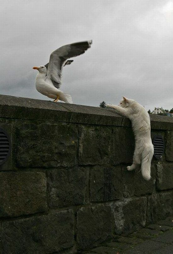 These funny animals (55 pics)