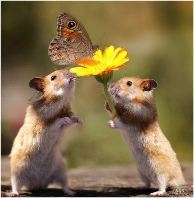 Life of hamsters  (10 pics)