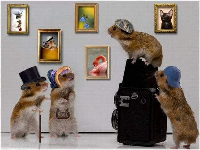 Life of hamsters  (10 pics)