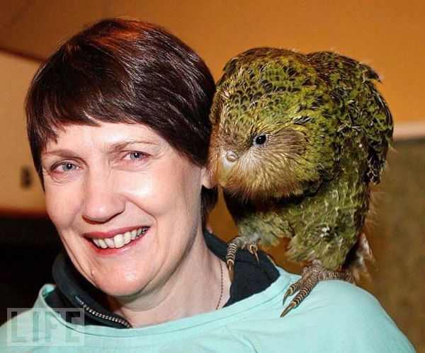 Very weird animals (27 pics)