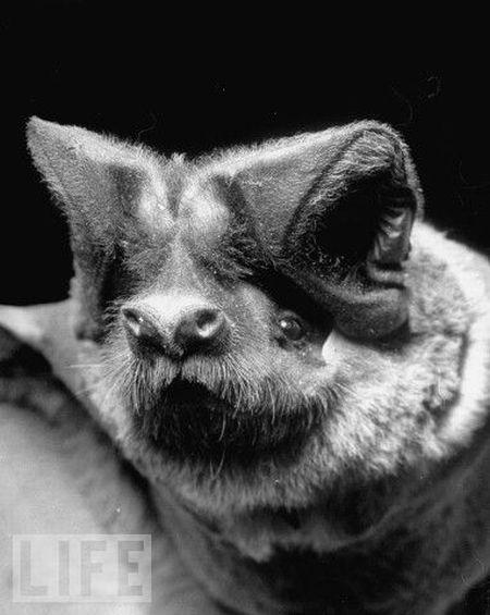 Very weird animals (27 pics)