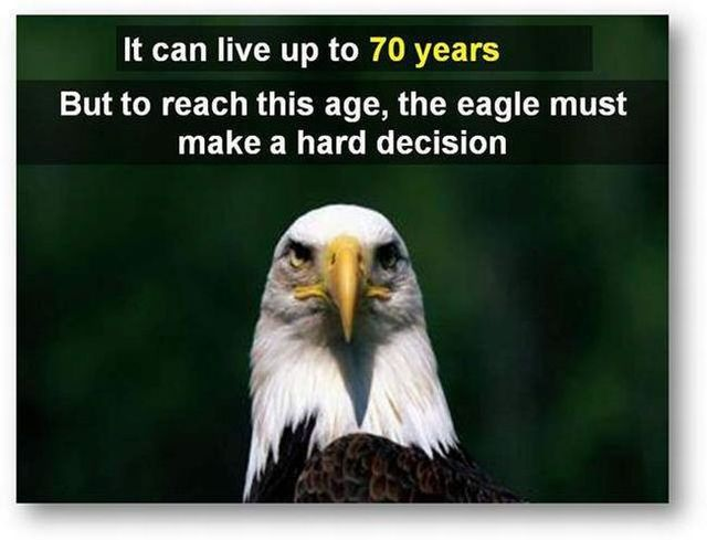 You should know the truth - Life of an eagle (13 pics)