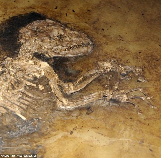 The missing link in human evolution was found (10 pics)