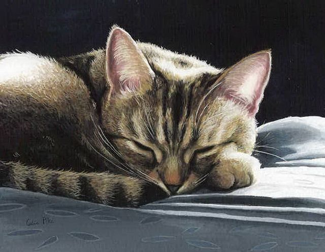 Great cat paintings by Celia Pike (20 pics)