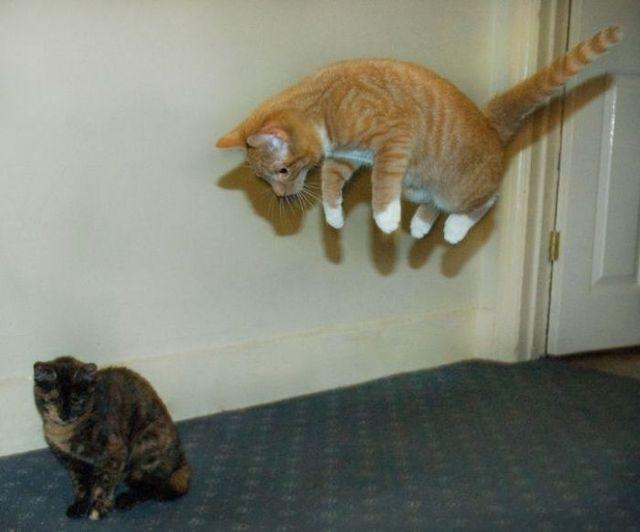 Masters of levitation (28 pics)