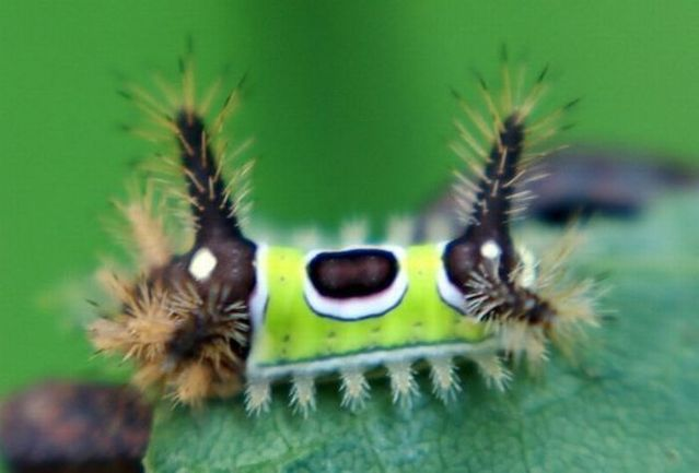 Insects with alien faces (16 pics)