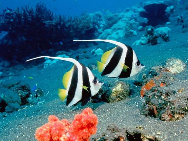 Australia – The Great Barrier Reef (43 pics)