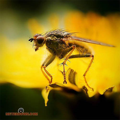 Great macro photography shots (20 pics)