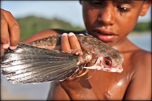 Flying fish (5 pics+1 video)