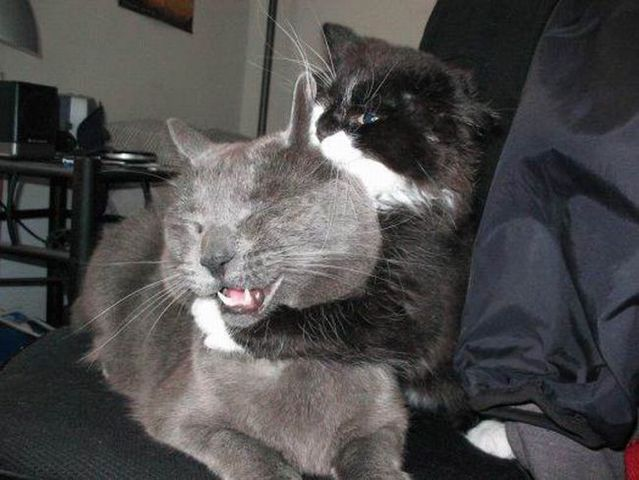These funny animals (40 pics)
