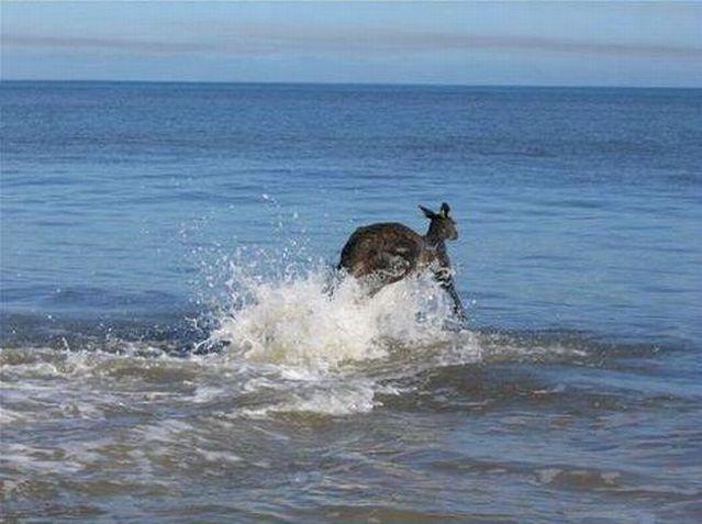 The new member of Australia's Olympic swimming team (9 pics)