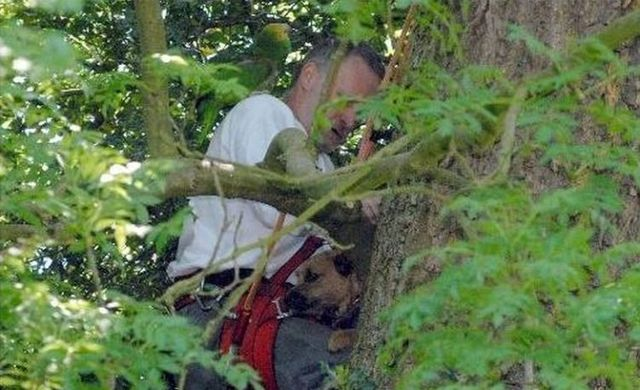 The rescue of a dog stuck in a tree