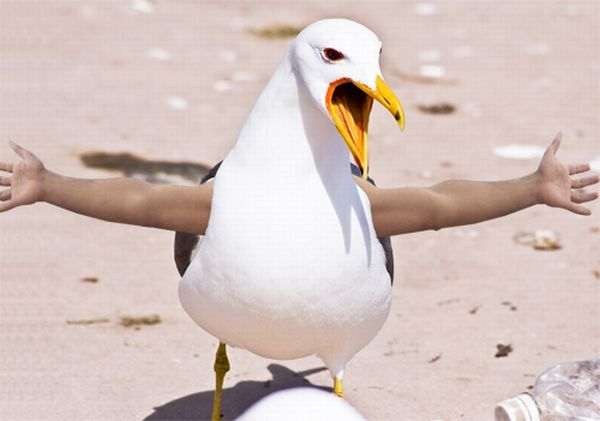 Funny montage - Birds with Human Hands. Part 2 (58 pics)