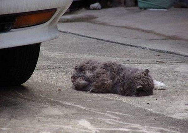 Is this cat dead? (6 pics)